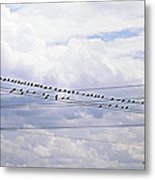 Birds On A Wire Pushed Metal Print
