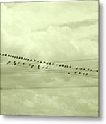 Birds On A Wire Tinted Metal Print