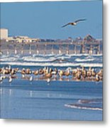 Birds Only Beach Metal Print