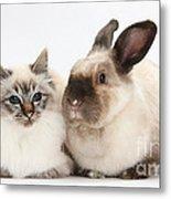 Birman Cat And Colorpoint Rabbit Metal Print