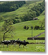Bishopdale In The Yorkshire Dales National Park Metal Print by Louise Heusinkveld