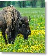 Bison And Friend Metal Print