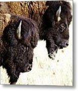 Bison Bison Metal Print