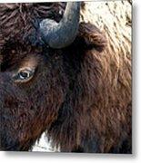 Bison Bison Up Close Metal Print