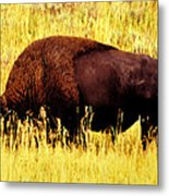 Bison In Field Metal Print