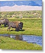Bison On Big Spring Creek Metal Print