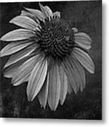 Bittersweet Memories - Bw Metal Print by David Dehner