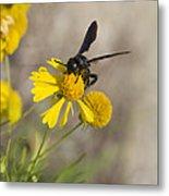 Bitterweed And Black Wasp Metal Print