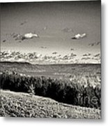 Black And White Above The Vines  Metal Print by Joshua House