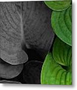 Black And White And Green Leaves Metal Print