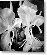 Black And White Hawaiian Ginger Flowers Metal Print