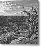 Black And White Image Of Tree Metal Print
