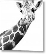 Black And White Portrait Of A Giraffe Metal Print