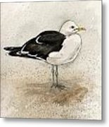 Black Backed Gull  Metal Print