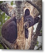Black Bear Cub No 3224 Metal Print