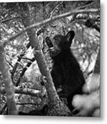 Black Bear Cub Metal Print