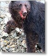 Black Bear Bloodied Lunch Metal Print