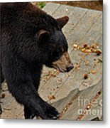 Black Bear Stepping Up In The World Metal Print