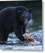 Black Bear With Salmon Carcass Metal Print