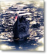 Black Beauty II Metal Print