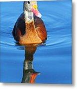 Black-bellied Whistling-duck Metal Print