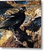 Black Bird With Yellow Eyes Metal Print