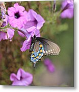 Black Blue And Orange Butterfly V3  Metal Print