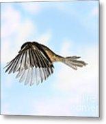 Black-capped Chickadee In Flight Metal Print