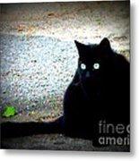 Black Cat Beauty Metal Print