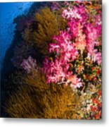 Black Coral And Soft Coral Seascape Metal Print