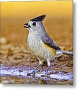 Black Crested Titmouse Metal Print