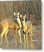Black Ear Deer Metal Print
