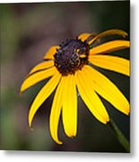 Black Eyed Susan With Young Bee Metal Print