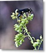 Black Flower Feeding Wasp Metal Print