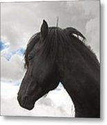 Black Icelandic Horse Stallion Metal Print