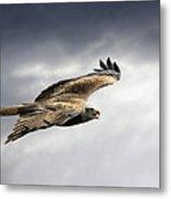 Black Kite In Flight Metal Print