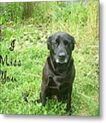 Black Lab Miss You Metal Print