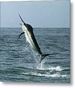 Black Marlin Metal Print