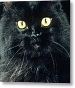 Black Persian Cat Metal Print