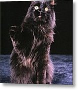 Black Persian Cat Reaches Metal Print