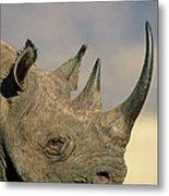 Black Rhinoceros Diceros Bicornis Close Metal Print