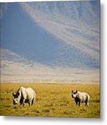 Black Rhinos Walking Across The Crater Metal Print