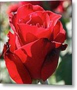 Black Rose Red Metal Print