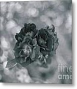 Black Rose With Bokeh Metal Print