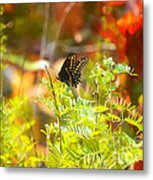 Black Swallow Tail Butterfly In Autumn Colors Metal Print