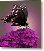 Black Swallowtail 1 Metal Print