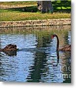 Black Swan's In Palm Springs Metal Print