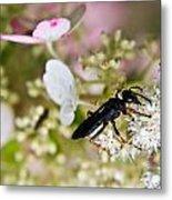 Black Wasp 1 Metal Print