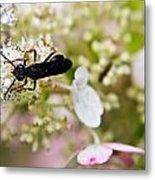 Black Wasp 2 Metal Print
