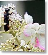 Black Wasp 3 Metal Print